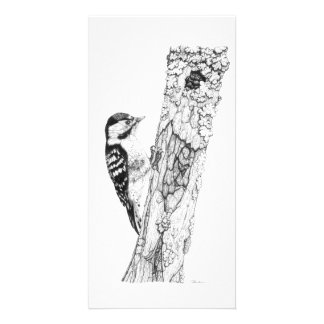 Greater Spotted Woodpecker - Photo Card