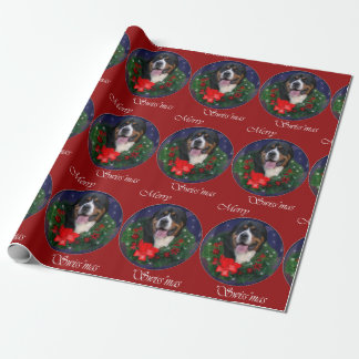 Greater Swiss Mountain Dog Christmas
