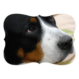 Greater Swiss Mountain Dog Personalized Announcement