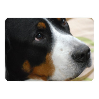 Greater Swiss Mountain Dog Custom Announcements