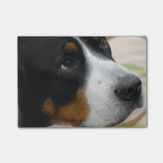 Greater Swiss Mountain Dog Post-it® Notes