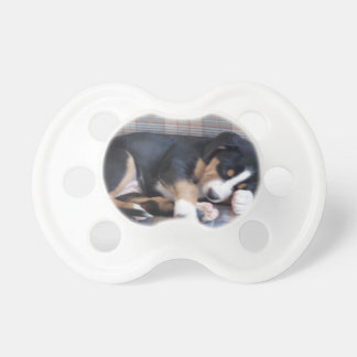 greater swiss mountain dog puppy baby pacifiers