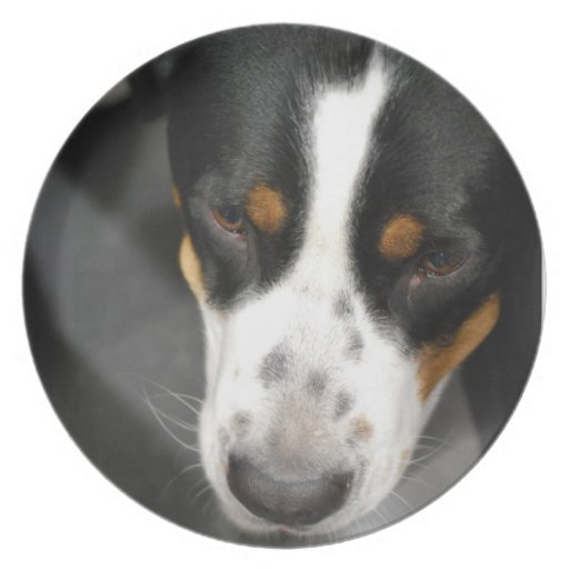Greater Swiss Mountain Dog Puppy Plate