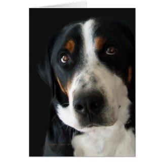 Greater Swiss Mountain Dog Sad Eyes Card