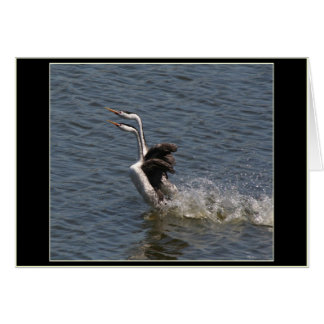Grebes Courtship Dance Card