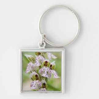 Greece, Crete. Orchid in bloom Orchis Silver-Colored Square Key Ring