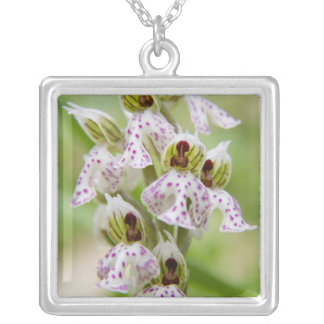 Greece, Crete. Orchid in bloom Orchis Square Pendant Necklace
