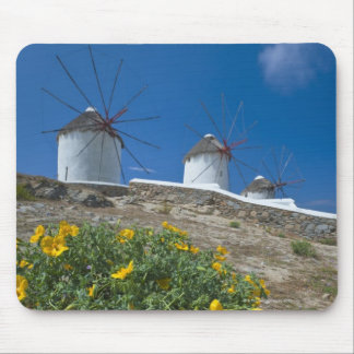 Greece, Cyclades Islands, Mykonos, Flowers near Mouse Pad