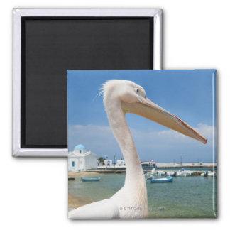 Greece, Cyclades Islands, Mykonos, Pelican on Magnet