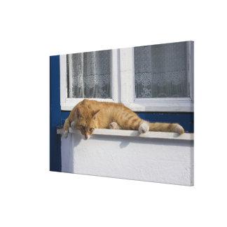 Greece, Mykonos. Curious orange tabby cat looks Canvas Print