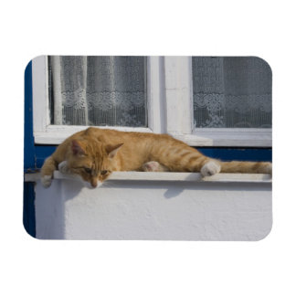 Greece, Mykonos. Curious orange tabby cat looks Magnet