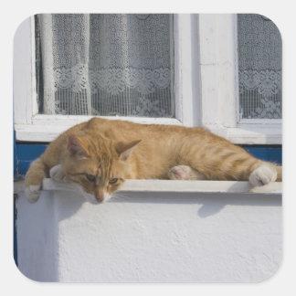 Greece, Mykonos. Curious orange tabby cat looks Square Sticker