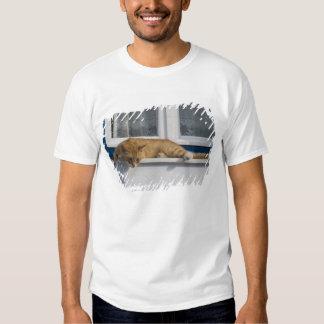 Greece, Mykonos. Curious orange tabby cat looks Tshirts
