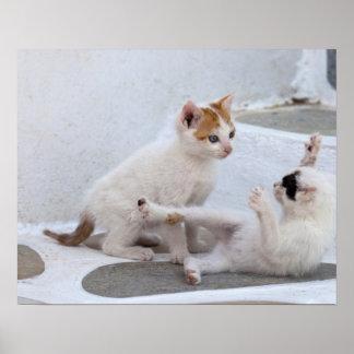 Greece, Mykonos, Kittens playing. Poster