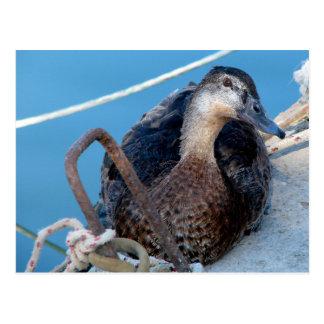 Greece Rhodes Curious Duck Holliday Vacation Card Postcard