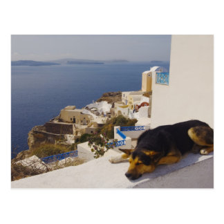 Greece, Santorini Island, Oia City, dog sleeping Postcard