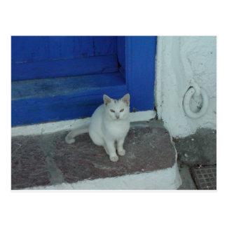 Greek Kitty Postcard