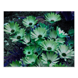 Green African Daisies Flower Poster
