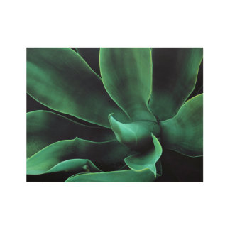 Green Agave Attenuata Wood Poster
