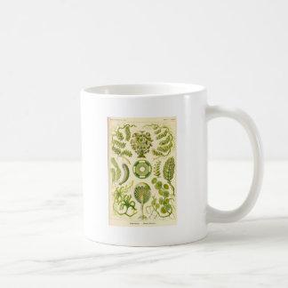 Green Algae Mug