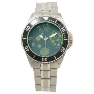 Green Algae Pandorina morum Watch