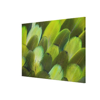 Green Amazon Parrot Feathers Canvas Print