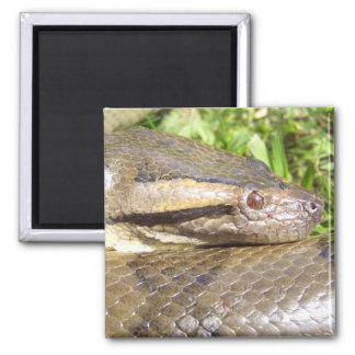 Green Anaconda Magnet