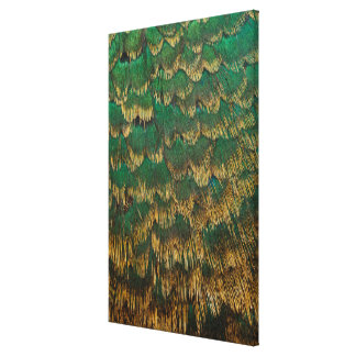 Green And Gold Pheasant Feathers Canvas Print