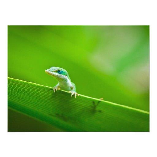 Green Anole Lizard Encounter Art Photography Photographic Print