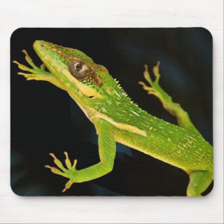 Green Anole Mouse Pad