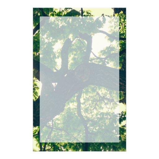Green Backlit Tree, Sunlight Flora Stationery