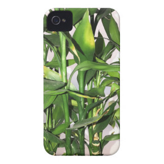 Green bamboo shoots and leaves Case-Mate iPhone 4 case