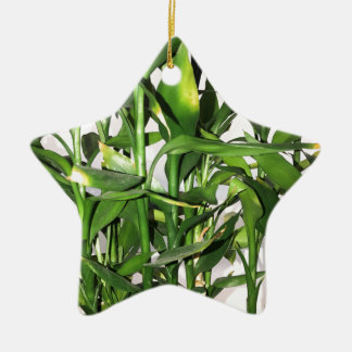 Green bamboo shoots and leaves ceramic star decoration