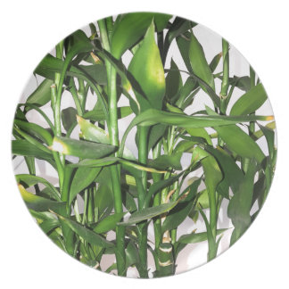 Green bamboo shoots and leaves plate
