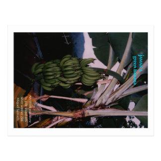 Green Banana Jamaica Postcard