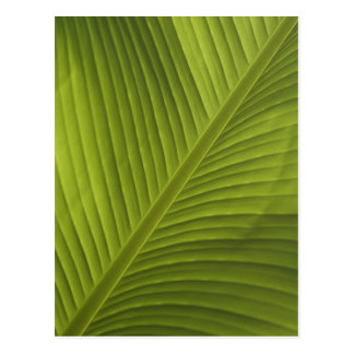 Green Banana Leaf Color Close-Up Detail Photo 2 Postcard