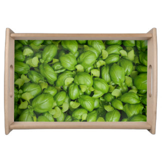 Green basil leaves serving tray