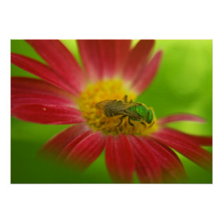 Green Bee Daisy Poster or Print