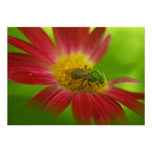Green Bee & Daisy Poster or Print