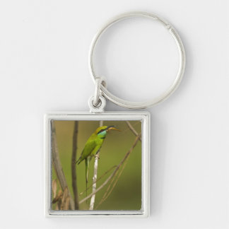Green Bee-eater eating insect Silver-Colored Square Key Ring