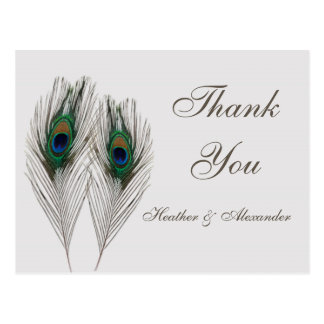 Green blue peacock's feathers Thank You Postcard