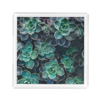 Green Blue Succulent Plants Acrylic Tray