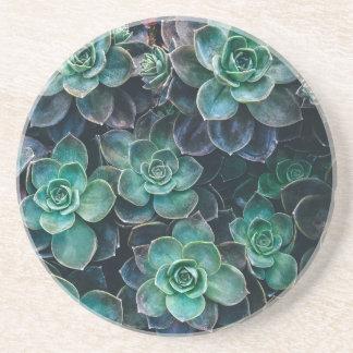 Green Blue Succulent Plants Coaster