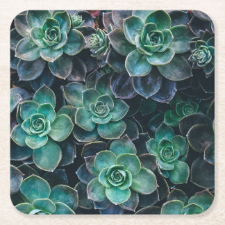 Green Blue Succulent Plants Square Paper Coaster