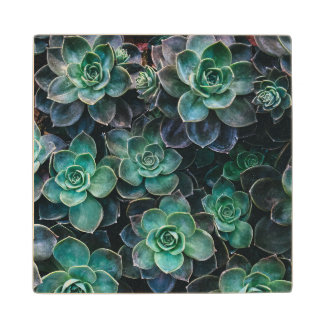 Green Blue Succulent Plants Wood Coaster