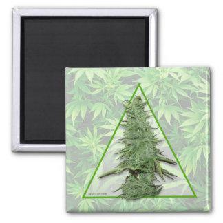Green Bob Magnet