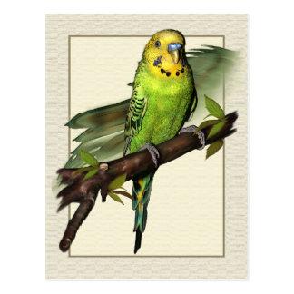 Green Budgie Art Postcard