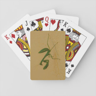 Green bug playing cards