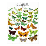 Green Butterfly Collection Post Card