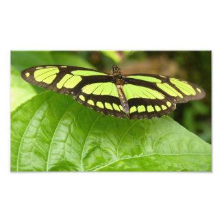 green butterfly photograph